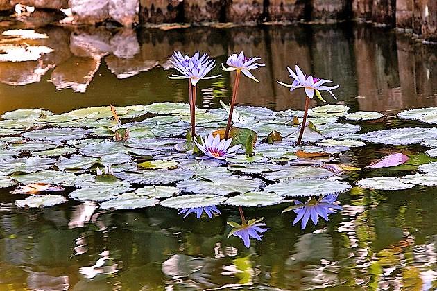 cayman-islands-botanic-park